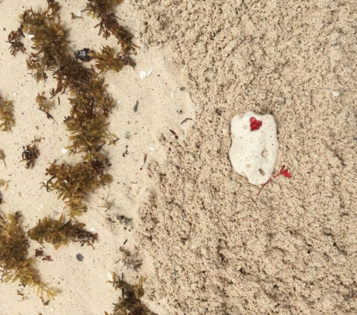 Série Coeur corail