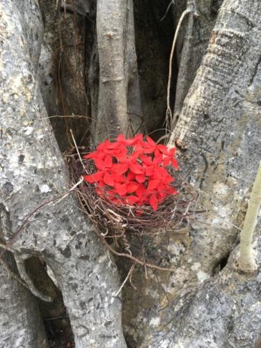 Série Un nid, une vie